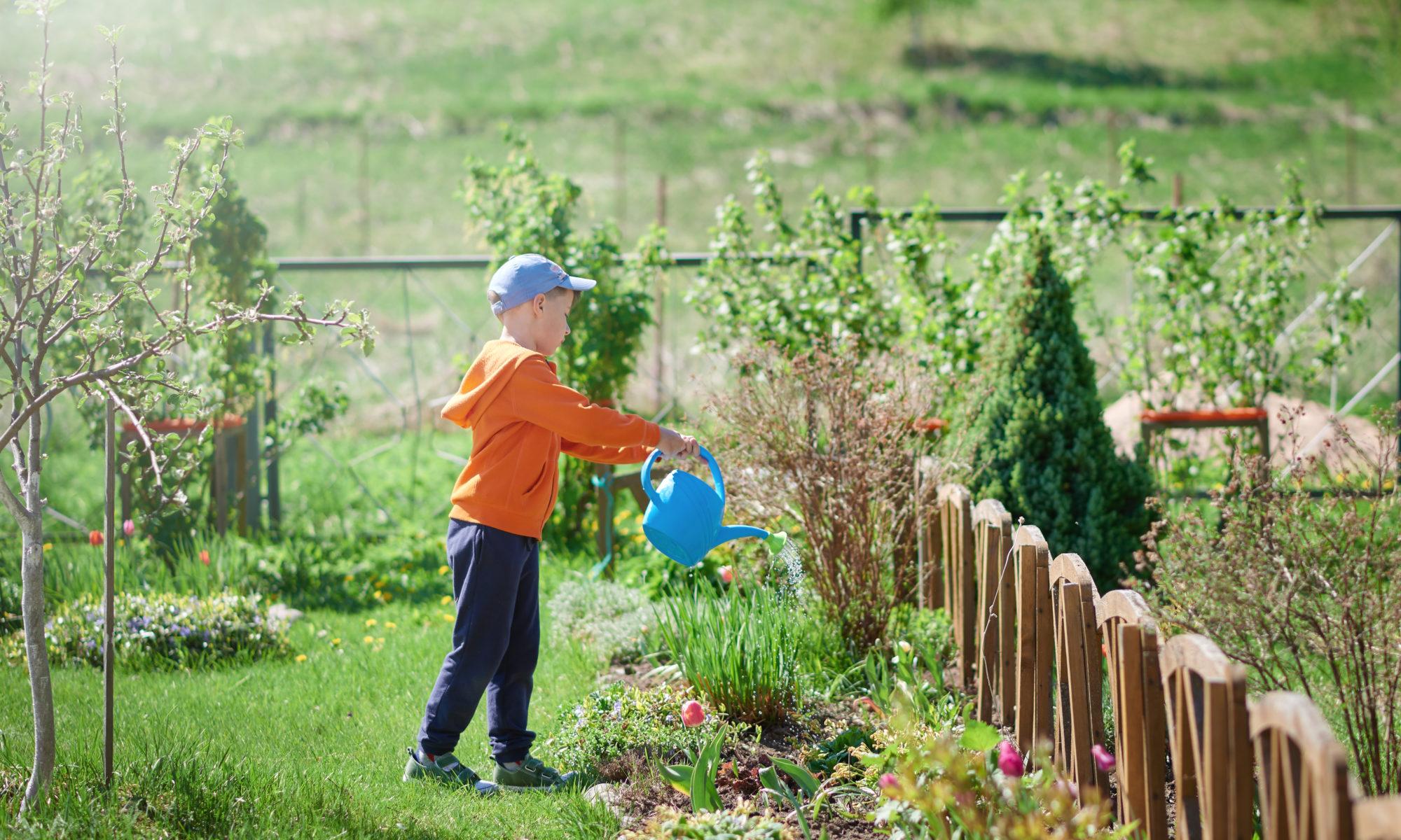 Jardin arrosage plantes