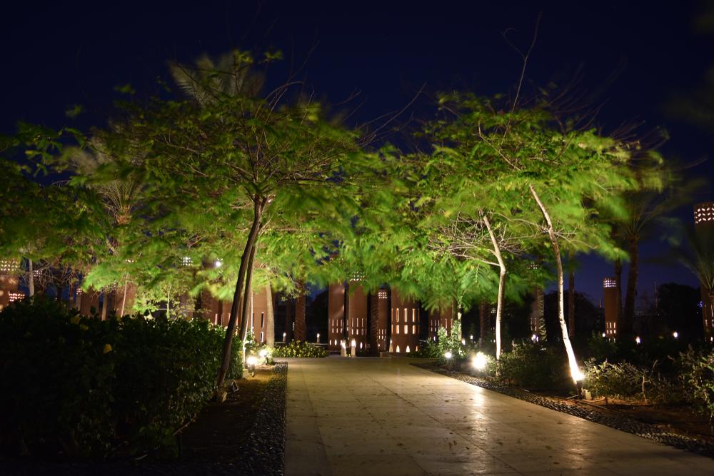 arbre lumiere