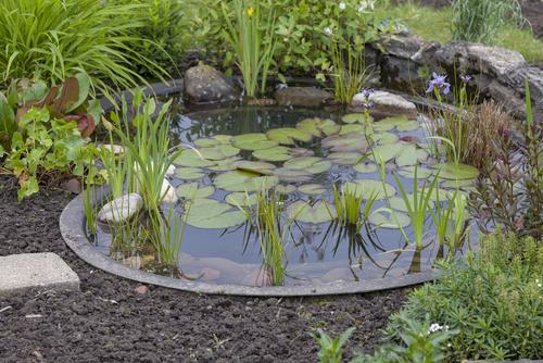 bassin-filtration