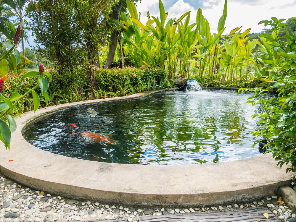 bassin jardin entretien