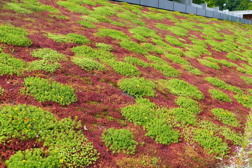 entretien toit vert
