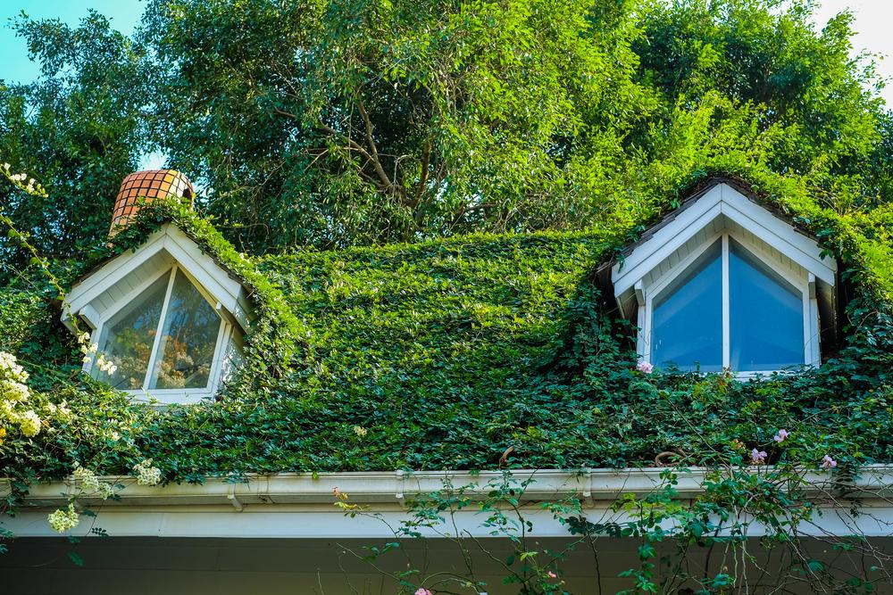 etanche toit vert