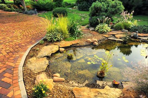bassin-jardin