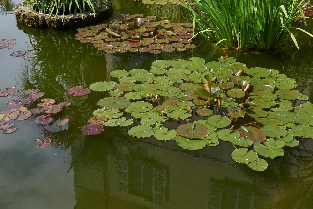 creation bassin