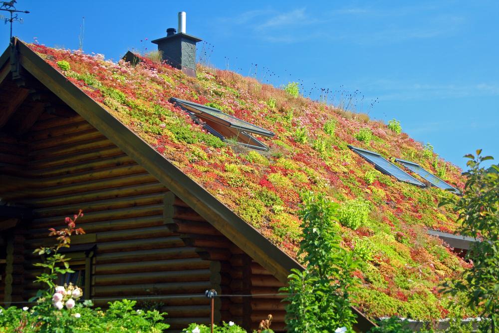 drainage toit vert