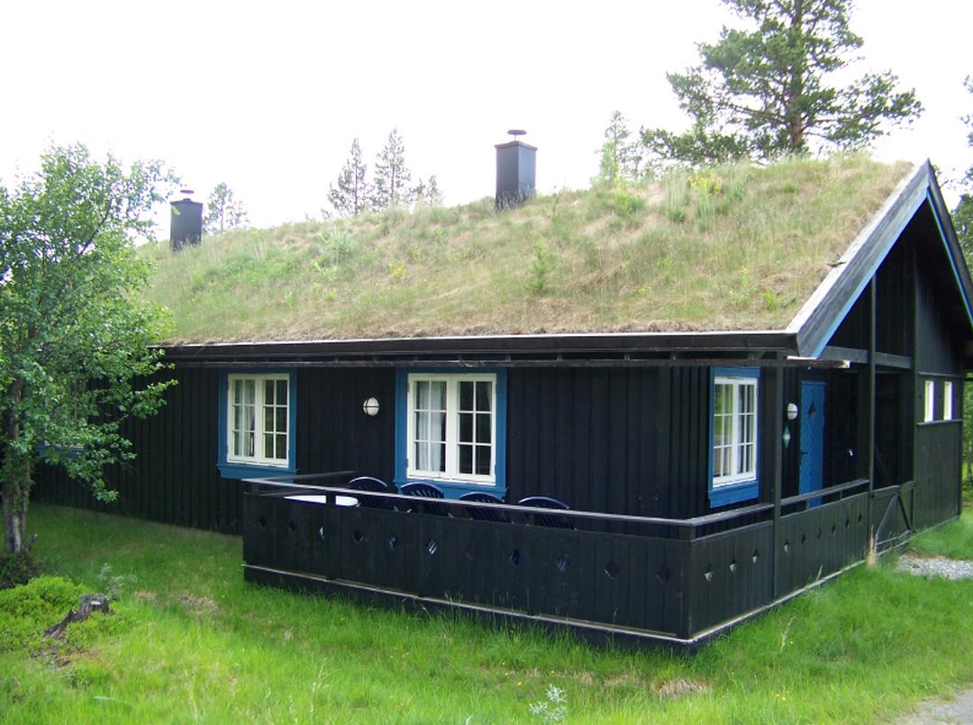 Comment entretenir une toiture végétalisée